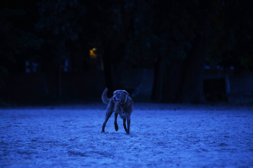 cropped-dogs-a-wolf-brighter-copyrighted-plain.jpg